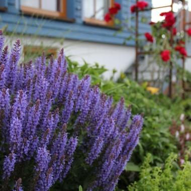 Gartenbau Überlingen052